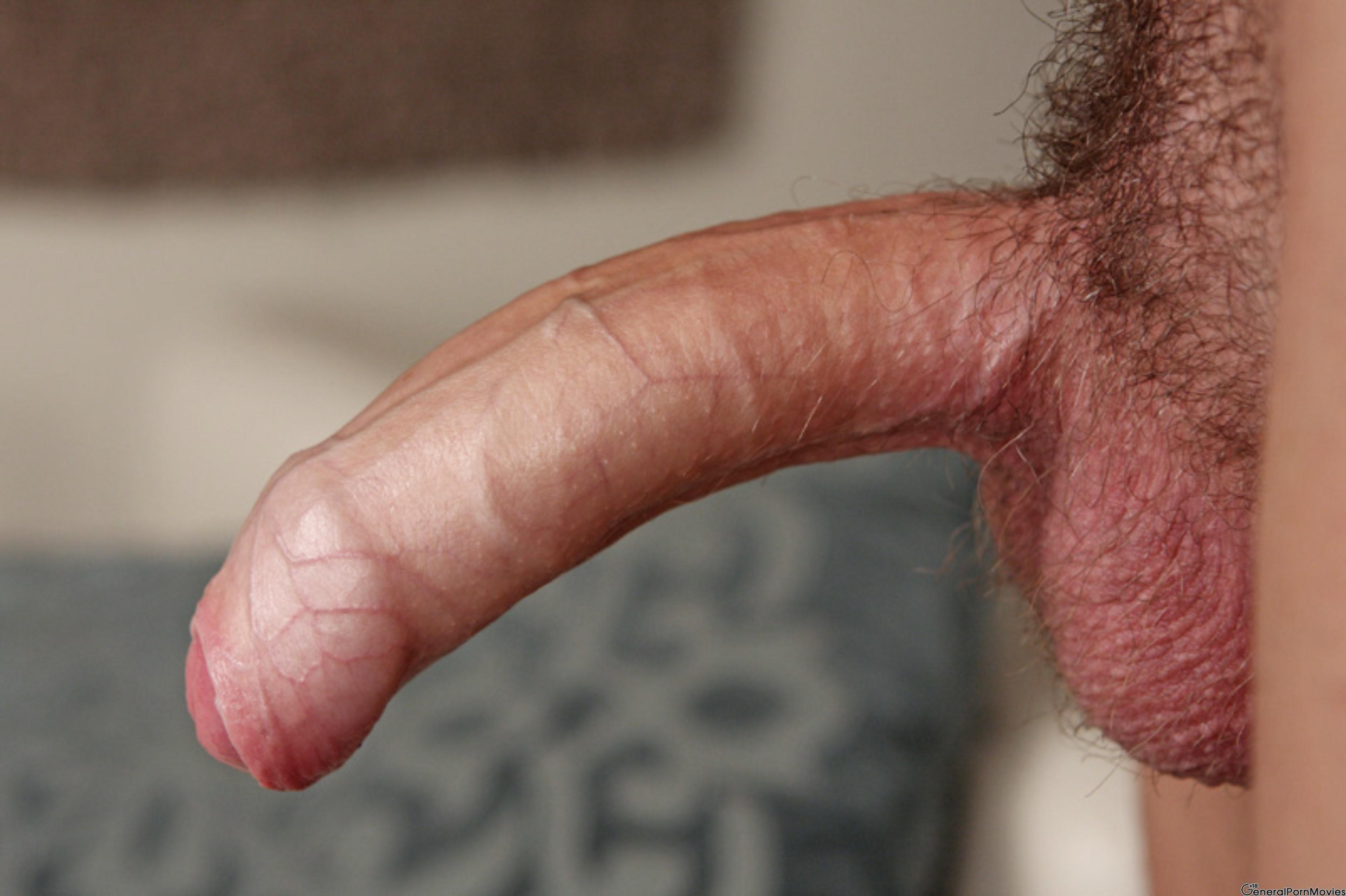 возбужденный пенис